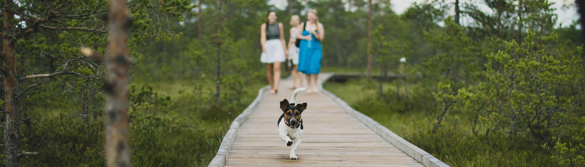 Animal Nerd - Dog Walk